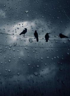 Dark and Windy Night