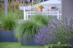Ogród tworzę nowoczesny czyli wewnętrzna walka jak nie zostać kokoszką :) - strona 1050 - Forum ogrodnicze - Ogrodowisko