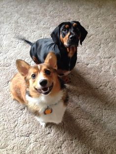 #Corgis and Friends: The Gang's All Here!