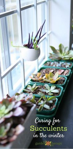 When caring for succulents during the winter, try any one of Southern Patio's decorative containers!  For details, visit:  www.southernpatio.com
