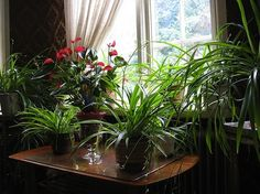 How to Care for Indoor Plants during Winter