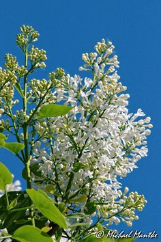 Frühlingsgrüße! http://www.erkunde-die-welt.de/2015/04/29/endlich-fruehling/ #frühling #blumen #gutelaune #erkundediewelt #geniessejedentag
