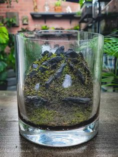 sheet moss in a terrarium Closed Terrarium Plants, Terrarium Jar, Terrarium Ideas, Types Of Moss, Wood Table Design, Mini Plants, Plant Care, Plant Decor, Glass Jars