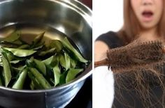 This Curry Leaf Oil Will Stop Hair Loss And Increase Hair Growth | Herbs Remedies