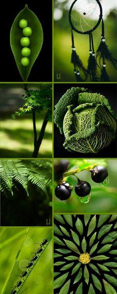 ** green | black ღ Lu's Inspiration