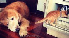 Keelo e Koda, l'amicizia fotografata in 20 scatti