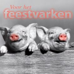 Art from the Heart - feestvarkens kaart (Voorzijde)