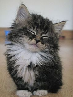 Nodding #Kitten
