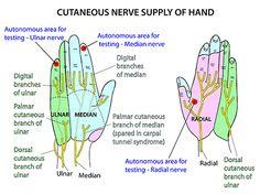 Instant Anatomy - Upper Limb - Nerves - Skin - Dermatomes