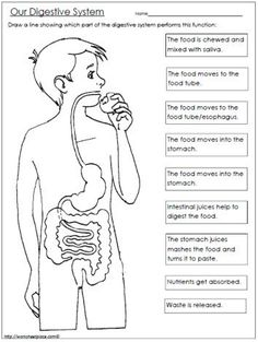 FREE Digestive System Worksheet - Homeschool Giveaways Best Picture For Human Body System interactive notebooks For Your Taste You are looking for something, and it is going to tell you exactly what y Human Body Science, Human Body Activities, Human Body Unit, Human Body Systems, Teaching Activities, Teaching Science, Life Science, Science And Nature, Human Body Lesson