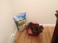 17 Best Cat Litter images in 2018 | Cat litter brands, Natural cat