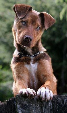 Baby Animals, Cute Animals, Dog Bedroom, Drawn Fish, Pet Dogs, Pets, Doggies, Dog Pin, Dog Boarding