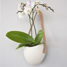 Orchids on walls