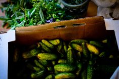 Pickling cucumbers for fermented pickles