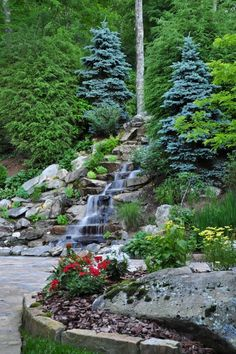 waterfall and evergreens