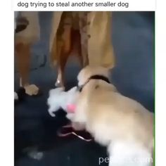 When you desperately want a friend! - AWW - - When you desperately want a friend! The post When you desperately want a friend! appeared first on Gag Dad. Cute Funny Animals, Cute Baby Animals, Funny Cute, Funny Dogs, Animals And Pets, Funny Humor, Hilarious, Cute Animal Videos, Funny Animal Pictures