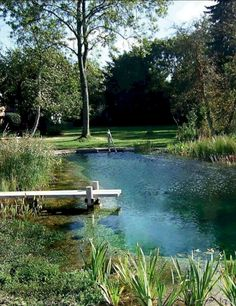 natural swimming pool landscape design swimming pool with dock aquatic plants swimming hole pond backyard water feature Natural Swimming Ponds, Swimming Pool Landscaping, Natural Pond, Pond Landscaping, Swimming Pools Backyard, Ponds Backyard, Swimming Pool Designs, Lap Pools, Indoor Pools