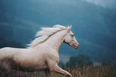Hier finden Sie einzigartige Pferdebilder und tolle Pferdesprüche, aus denen Sie vielleicht eine Inspiration schöpfen könnten!