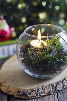 moss with tea light candle. this would be a way to bring the mountains in with out it being too Christmas