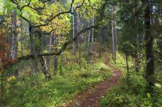 Footpath in Autumnal Forest in Finland Canvas Prints, Framed Prints, Autumn Art, Wood Print, Beach Towel, Finland, Wall Art, Artwork, Work Of Art