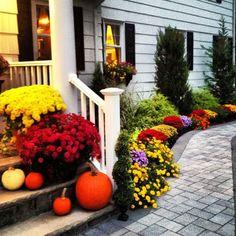Interesting Garden ideas