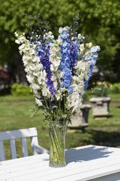 Delphinium i blått og hvitt https://www.mestergronn.no/
