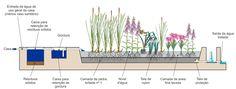 Jardins Filtrantes: opção para tratamento de esgoto (águas cinzas) - Plante Vida