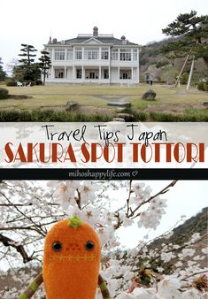 Tottori, Sakura Cherry Blossom, Famous Buildings, Rurouni Kenshin, Filming Locations, Adventure Travel, Travel Tips, About Me Blog, Spring