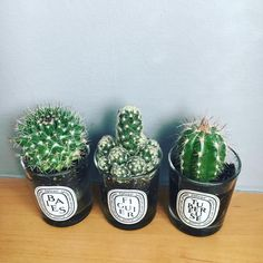 Diptyque cactus decor • Instagram photo by @rachel_kosys