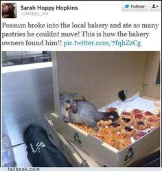 Possum broke into a bakery