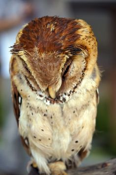 """""""All I have to do is sit at my desk for the next six hours and not vomit, cry, or die. This shouldn't be this hard."""" Hungover Owls. Fave."""