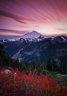 Winds of Color by Bryan Swan, via Flickr Huckleberry near Mt. Baker, WA, late Sept. 2008