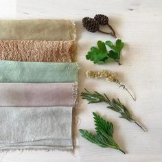 These are some of the locally foraged healing plants that I like to dye with. Here we have alder cones, hawthorn leaves, goldenrod,… Fabric Paper, Fabric Crafts, Tinta Natural, Natural Dye Fabric, Natural Dyeing, Fabric Dyeing Techniques, Textile Dyeing, Tie Dye Crafts, Shibori
