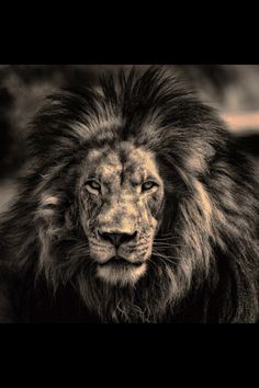 Have the courage and the heart of a lion.
