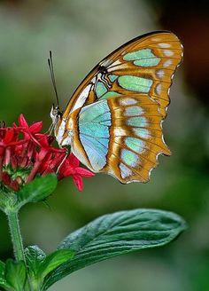 . Butterfly