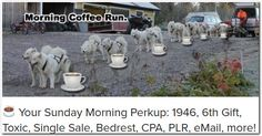 ☕ Your Sunday Morning Perkup: 1946, 6th Gift, Toxic, Single Sale, Bedrest, CPA, PLR, eMail, more!