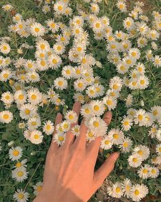 Beautiful photo by . Spring Aesthetic, Nature Aesthetic, Flower Aesthetic, Aesthetic Vintage, Belle Aesthetic, Simple Aesthetic, Images Esthétiques, Vintage Cartoons, Photographie Portrait Inspiration