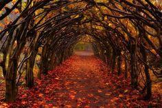 Autumn Tunnel, Christchurch, New Zealand