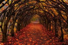 Autumn Tunnel, Christchurch, New Zealand