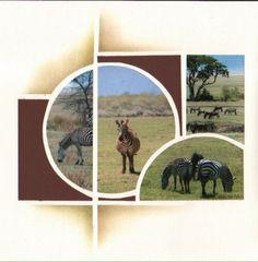 les zèbres de Tanzanie
