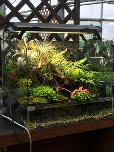 Paludarium with air plants Fish Tank Terrarium, Gecko Terrarium, Reptile Terrarium, Air Plant Terrarium, Gecko Habitat, Reptile Habitat, Aquatic Plants, Air Plants, Freshwater Aquarium