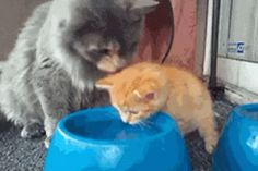 Loving Mother Teaches Child How to Drink