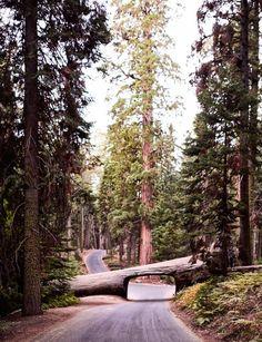 Tunnel Log, Sequoia National Park, US