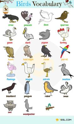 List of animal names with animal pictures in English. Learn these types of animals to increase your vocabulary about animals in English and thus enhanc Learning English For Kids, Kids English, English Tips, English Language Learning, English Study, English Lessons, Teaching English, Esl Learning, English Verbs