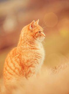 A true fall feline beauty! #Feline #CatPhotos