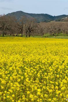 sonoma, california. This pic makes me homesick.