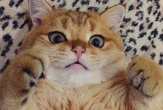 Cat Love Bites - Cute Cats