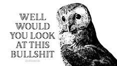 Work Memes, Work Humor, Haha Funny, Hilarious, Funny Stuff, Funny Quotes, Funny Memes, Bird Quotes, Bird Book