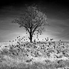 Mary Ann Reilly - Birds Lifting (Mountainville, NY. 2011)
