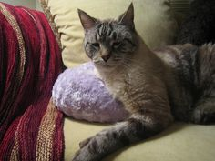 Wallace FatCat by rat finkleton, via Flickr